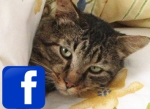 Síganos en FaceBook